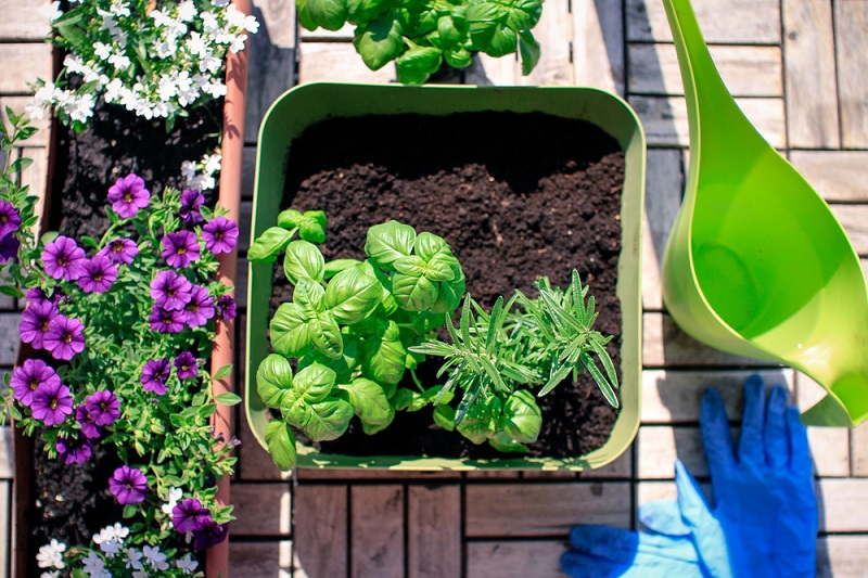 How to make a vegetable garden on the balcony