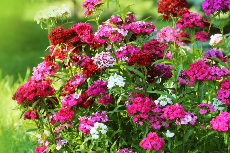 Autumn Flowers: which ones to grow in the garden or on the balcony