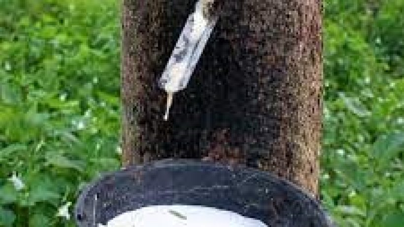 Rubber – A Material that Has Been Popular for Thousands of Years